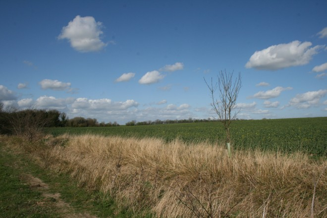 The Site Of The Conical (Chronicle) Hills, Whittlesford | Nicky Stockman